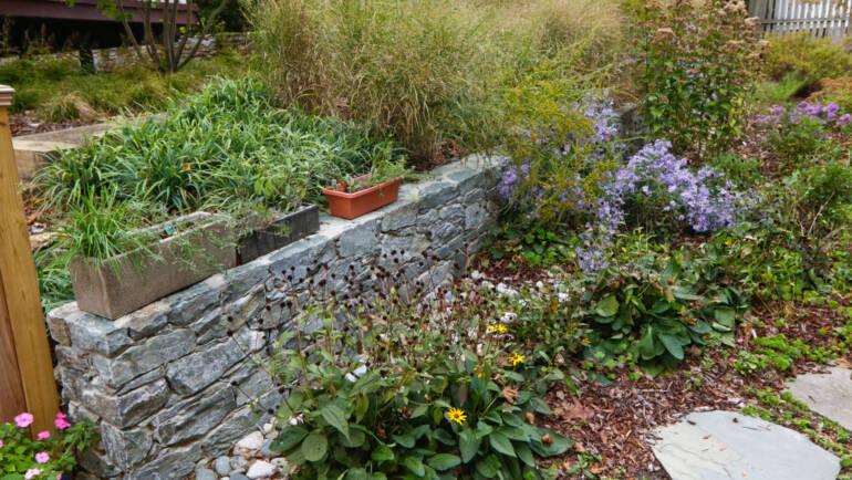 Summer Loving for your Garden