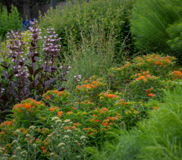 Backyard Bounty has a new horticulturist!